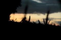 Dorado13 (20)